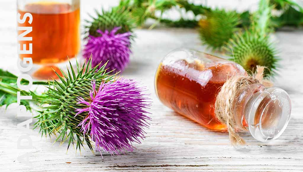 Adaptogens: What The Are And Why You Should Take Them