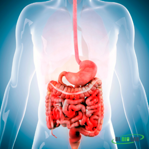 Private Label Digestion & Stomach Supplement Manufacturing