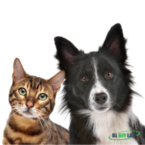 Private Label Pet Supplement Manufacturing