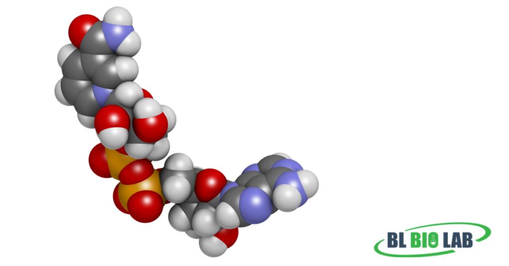 Nicotinamide Mononucleotide Manufacturing